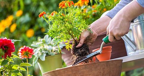 武汉绿植花卉养护