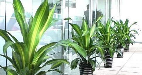 武汉办公室环境绿化