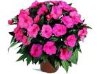 这7种植物的花期特别长